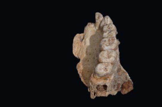 1_26_Jawbone fossil