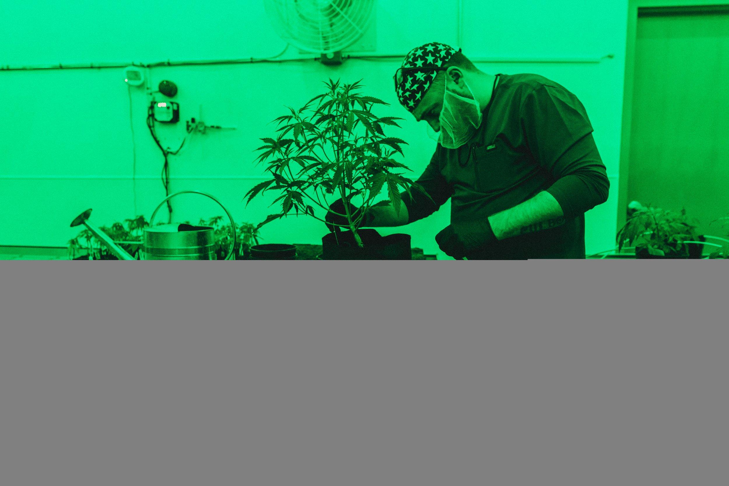 01_28_Marijuana