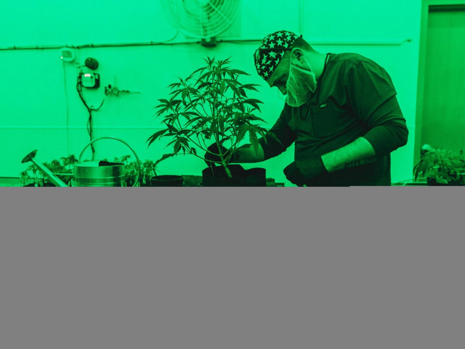 Texas' First Marijuana Dispensary Spurs Hope of Republicans Jumping
