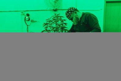 01_29_Marijuana