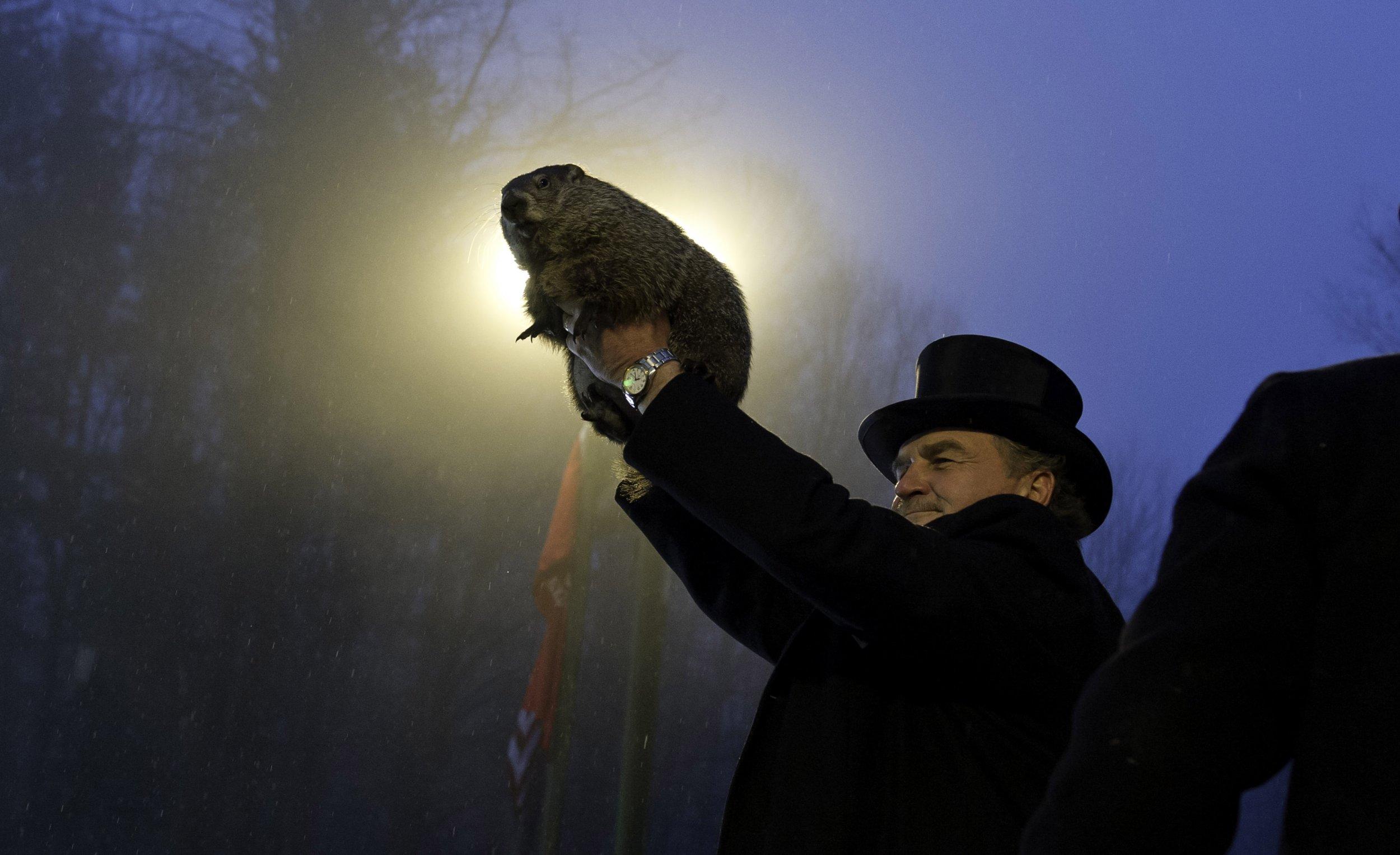 Punxsutawne-Phil-groundhog