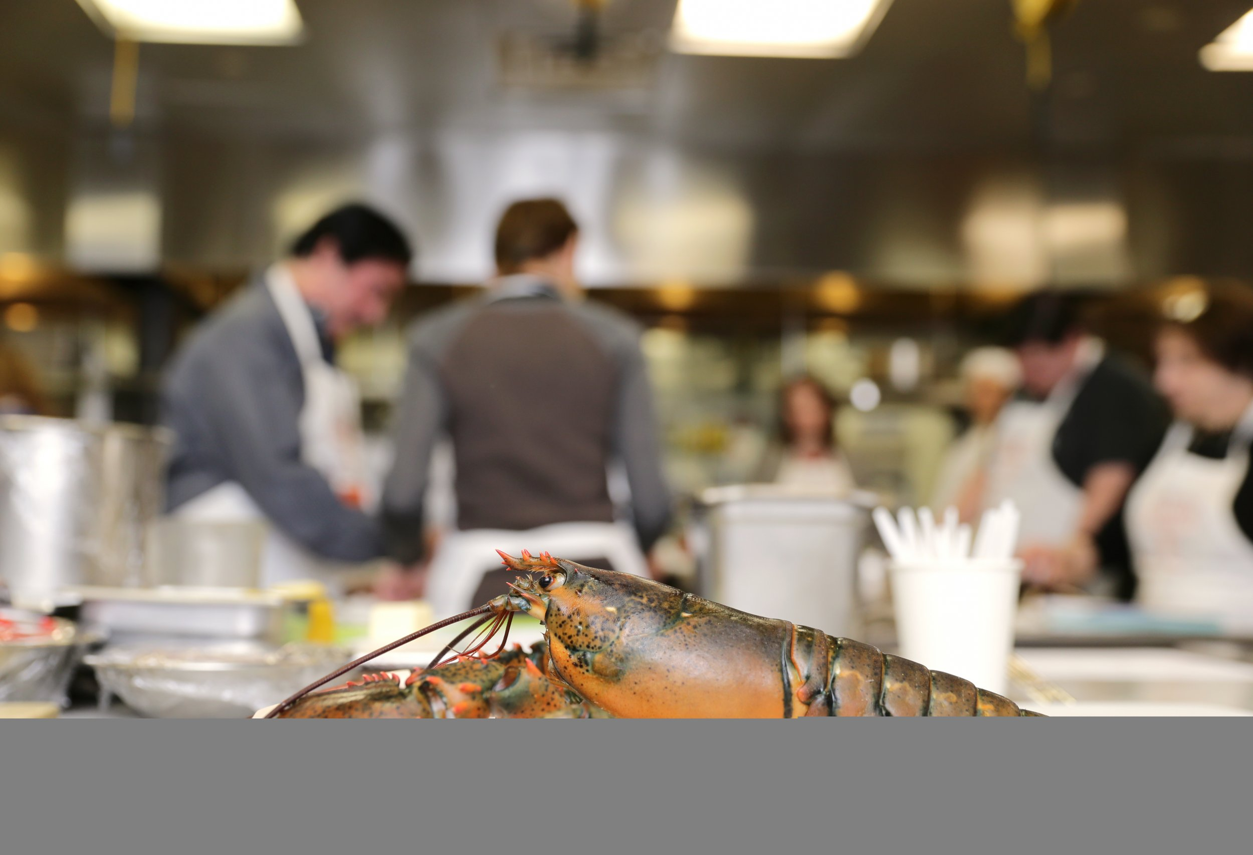 an analysis of the morality of boiling lobsters alive in consider the lobster an article by david fo What is the difference between boiling crabs/lobsters alive why must a chef cook a lobster live why don't chefs kill lobsters instead of boiling them alive.