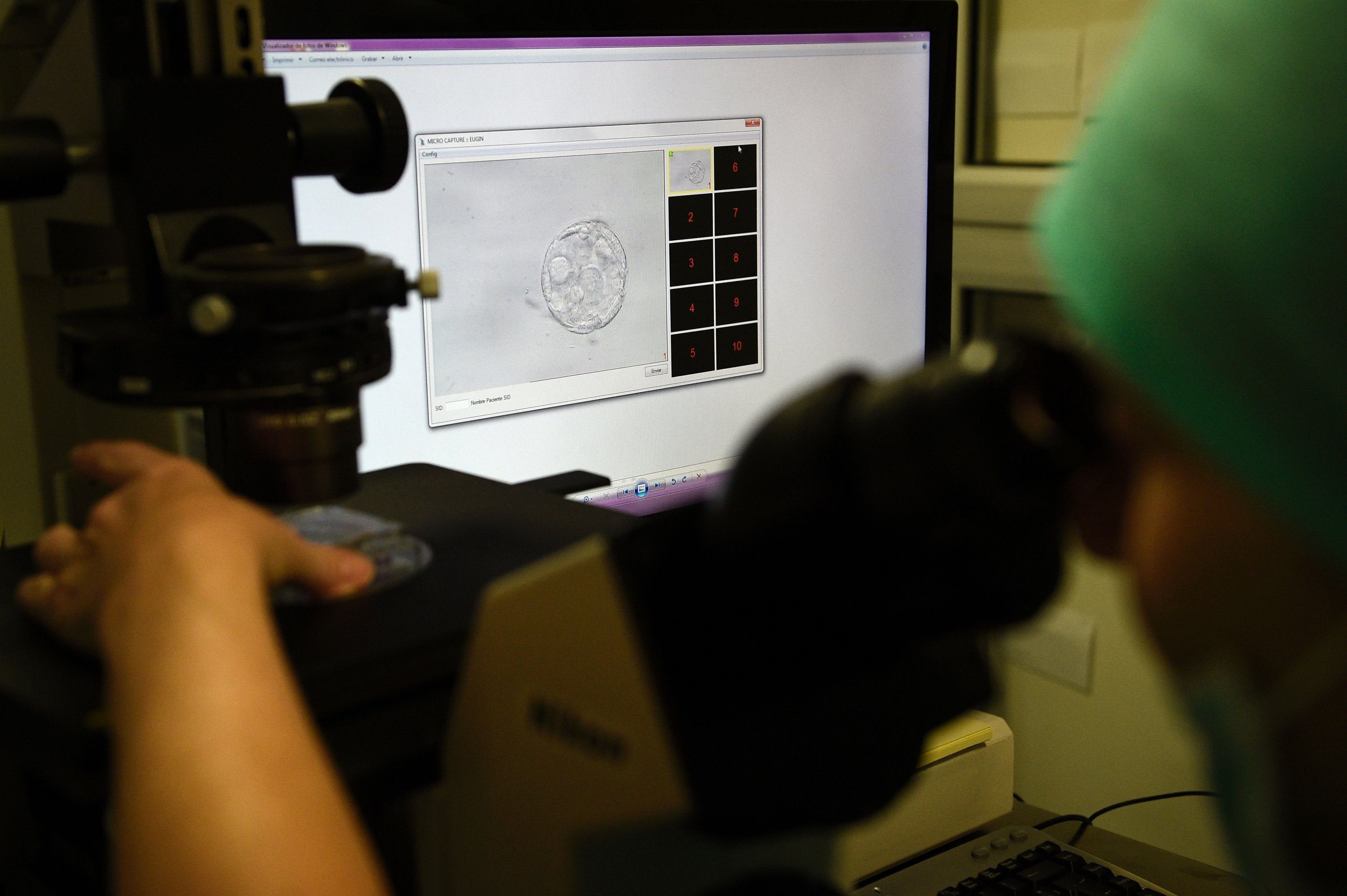 embryo under microscope