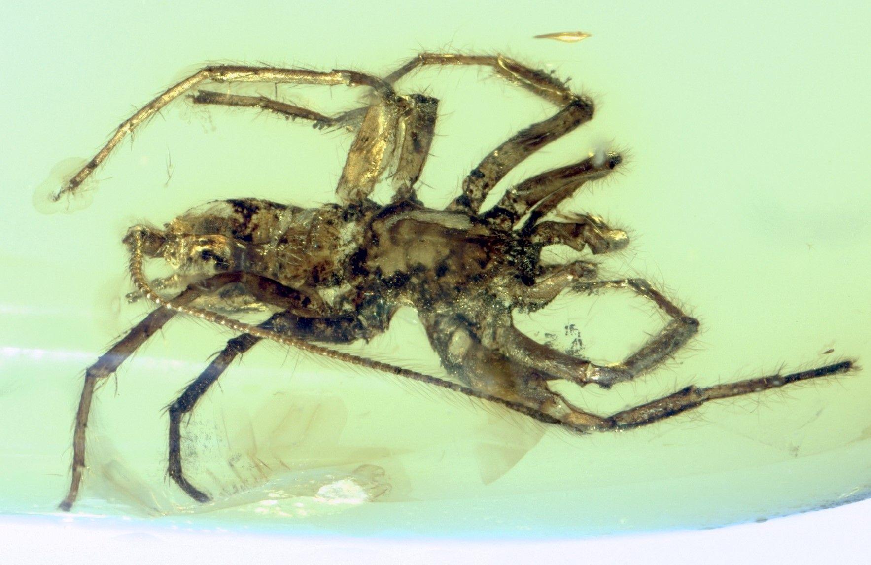 2_6_Spider