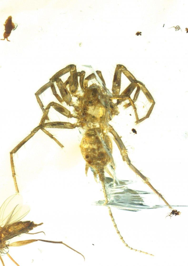 2_6_Spider_02