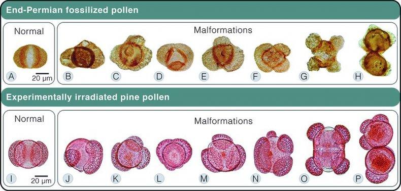 pollen1000