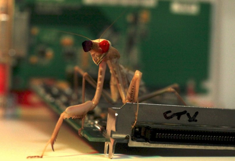 2_9_Mantis circuit board