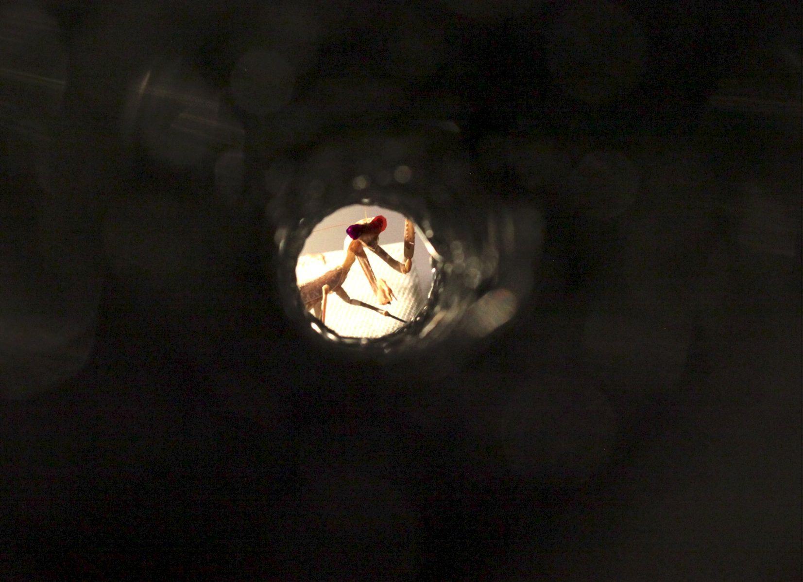 2_9_Praying mantis tube