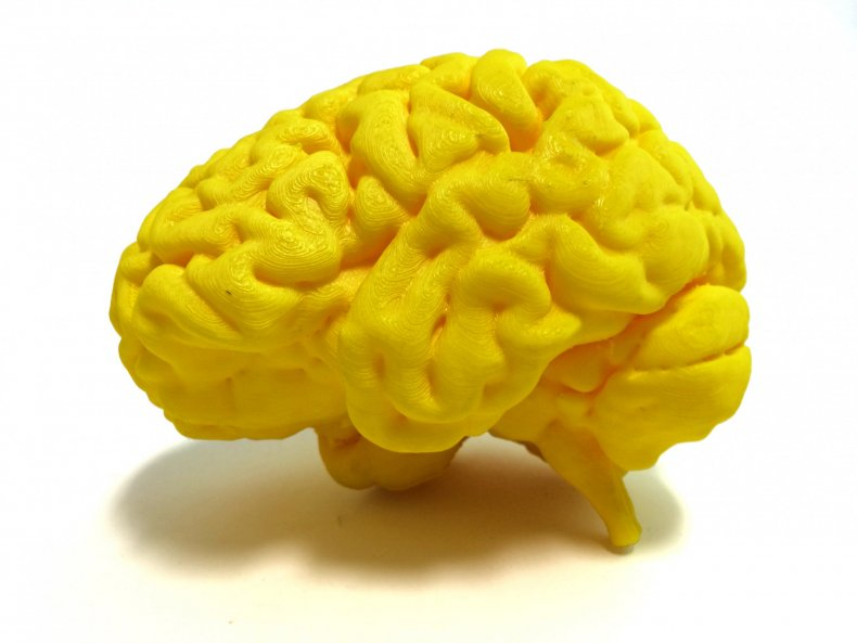 3-D printed human brain