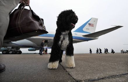 Image of: Anxiety Dog Issuu Jetblue Kicks Passenger Off Flight Because Of Emotional Support