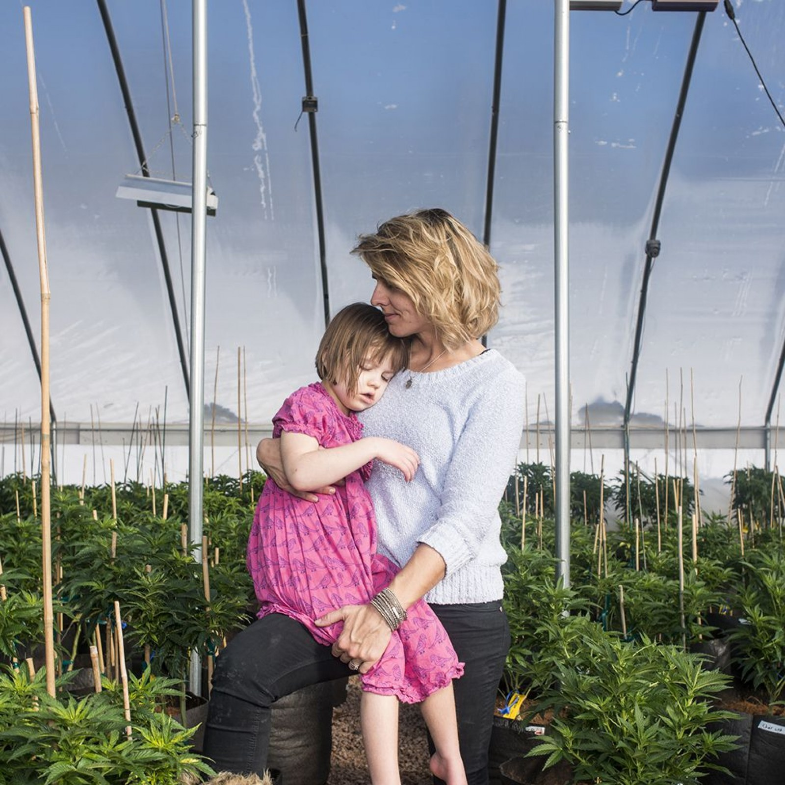 Record Breaking Grant May Fuel Autism >> Is Marijuana The World S Most Effective Treatment For Autism