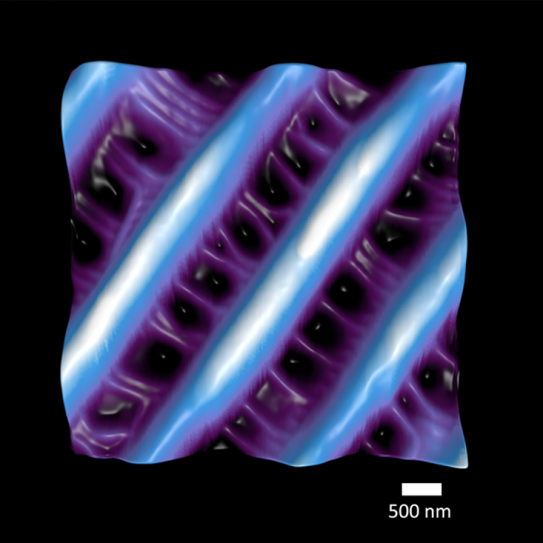2_14_Nature's Nanosized Net for Capturing Colour