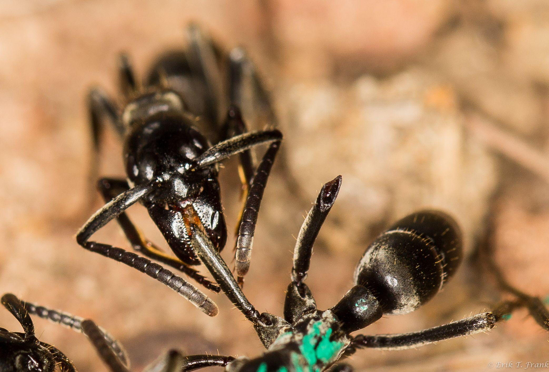 2_14_Ant treatment