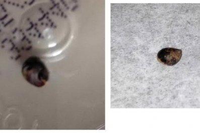 2_16_snail images