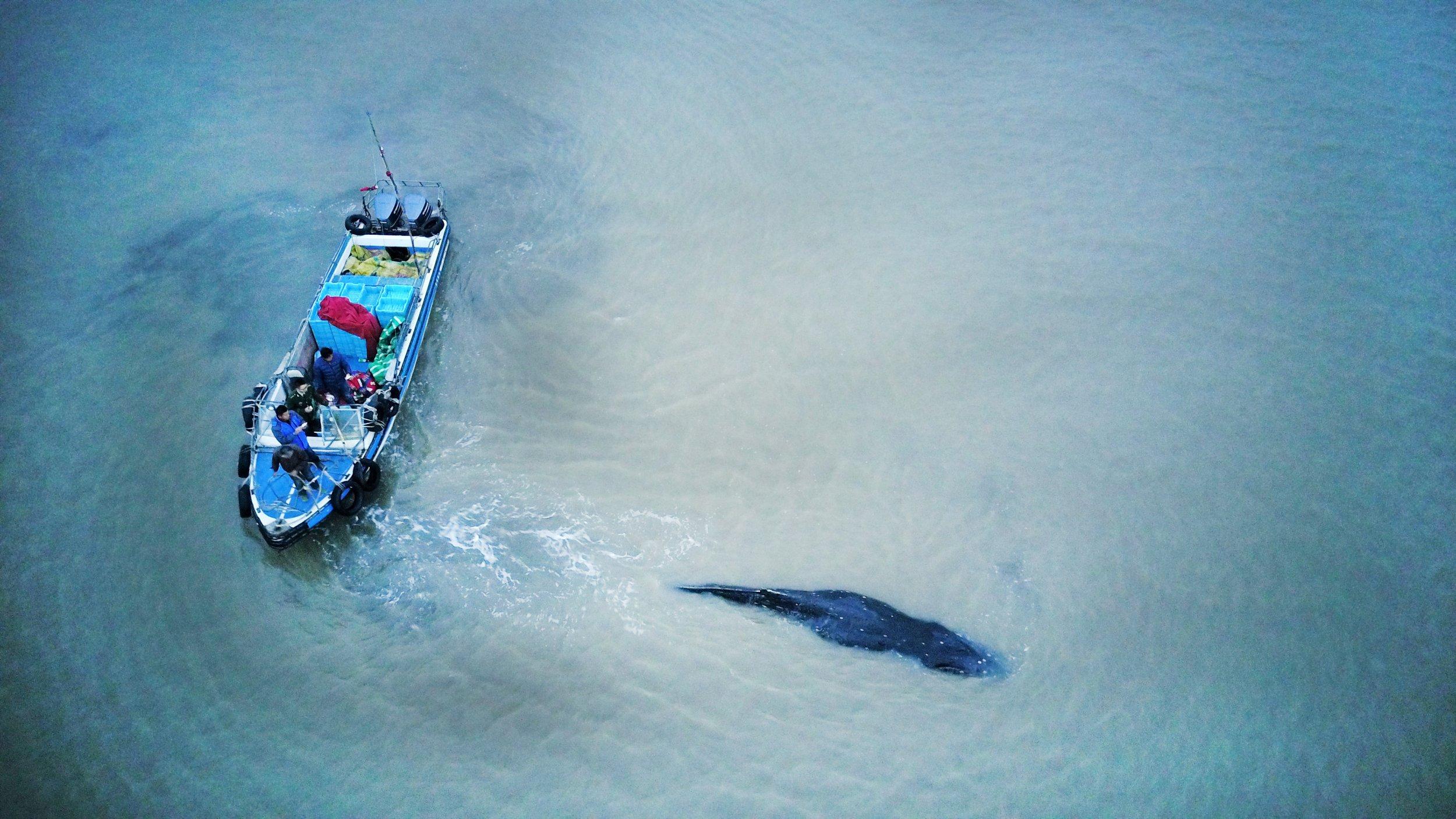 humpback whale china