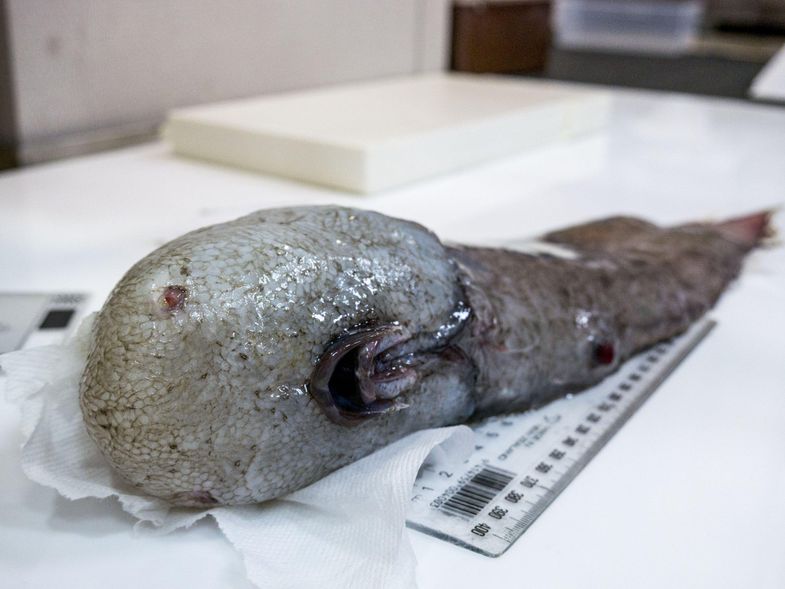 1 Faceless Fish_Credit Asher Flatt+Marine National Facility