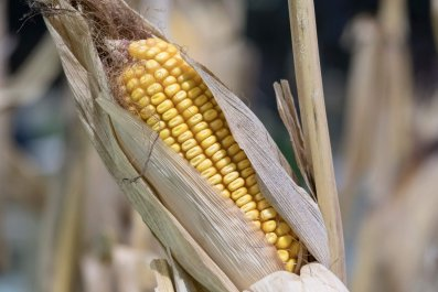 02_22_corn