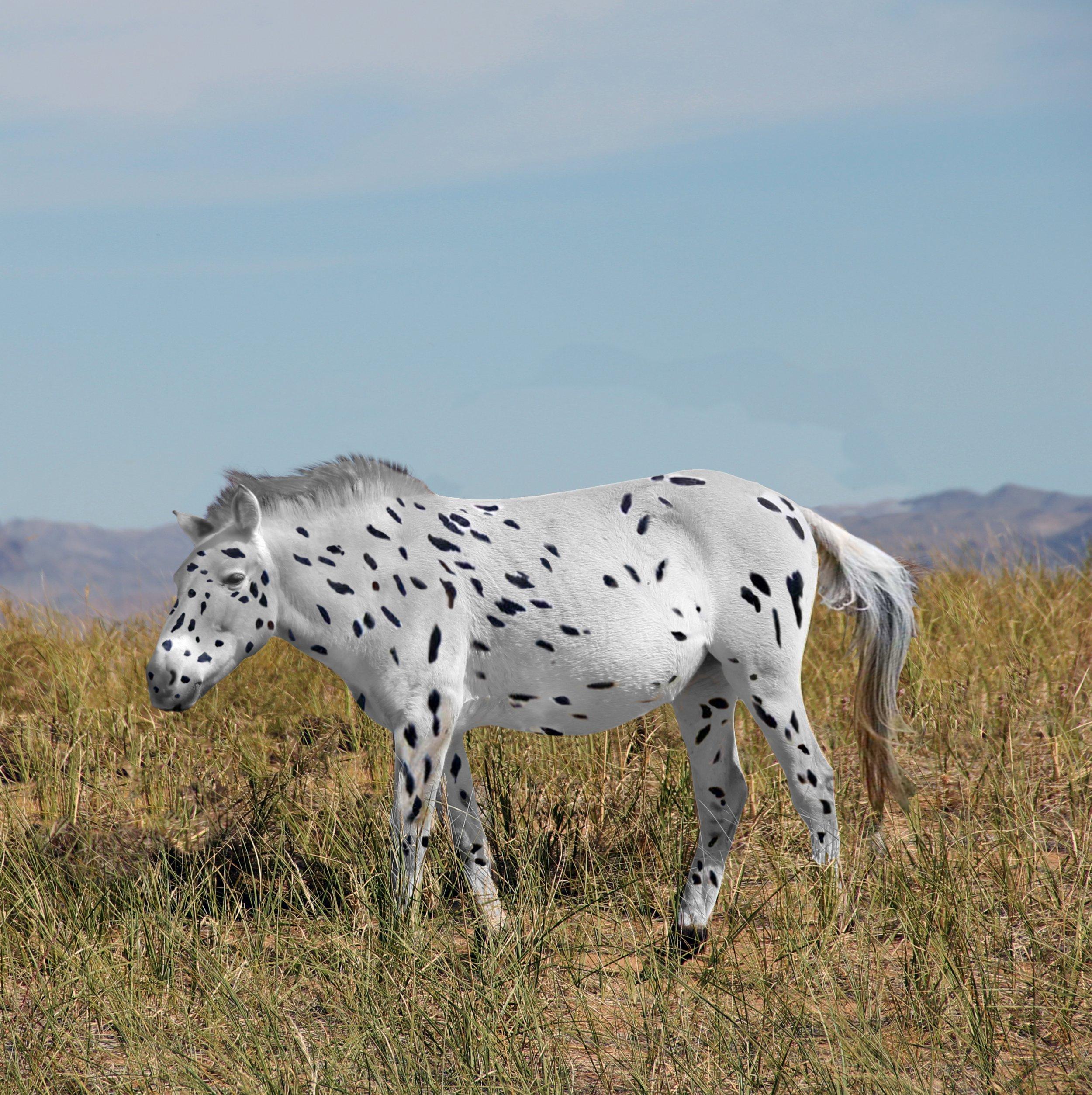 Early_Przewalskis_Horse