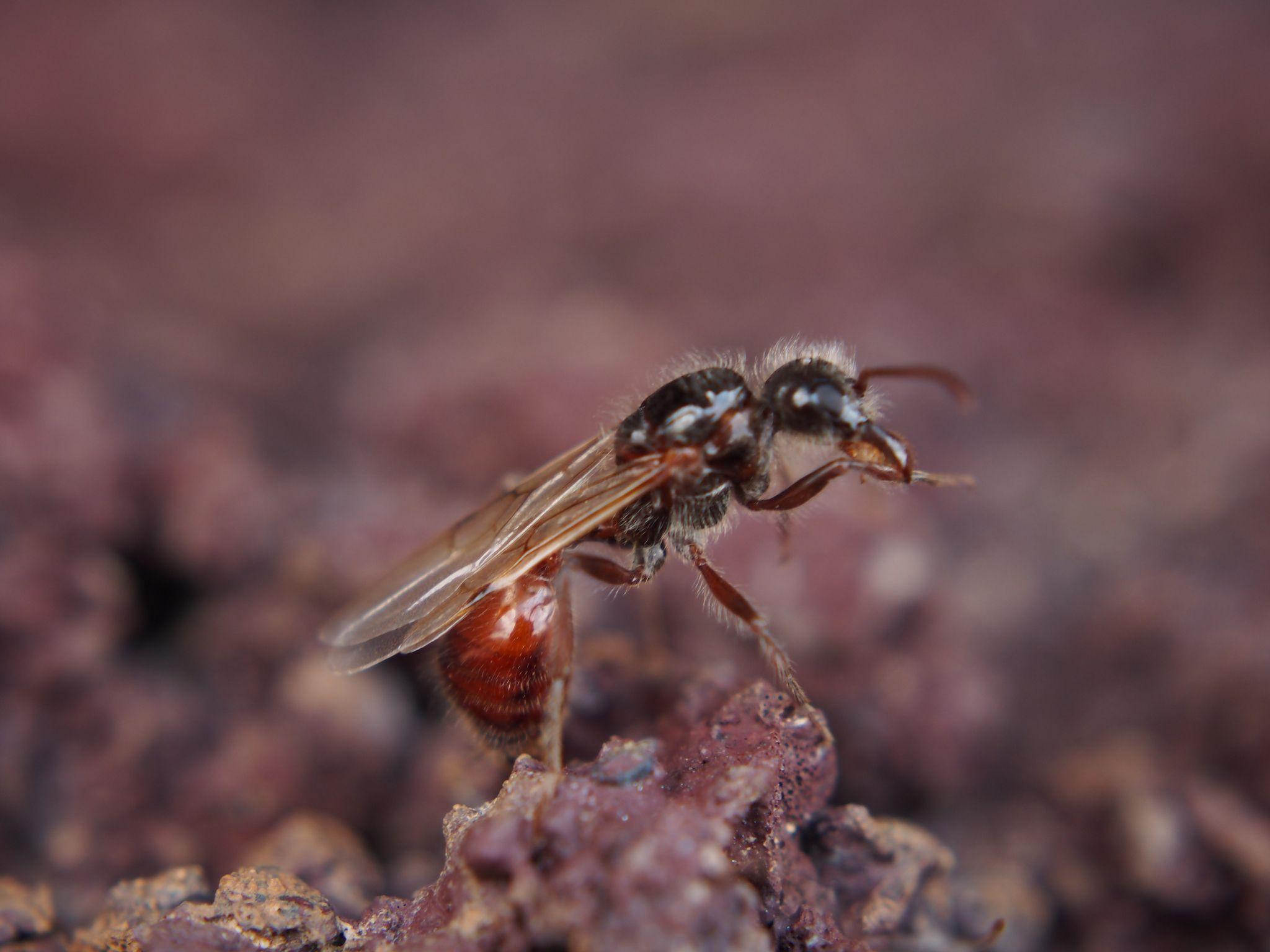 02_26_carpenter_ant_fungus
