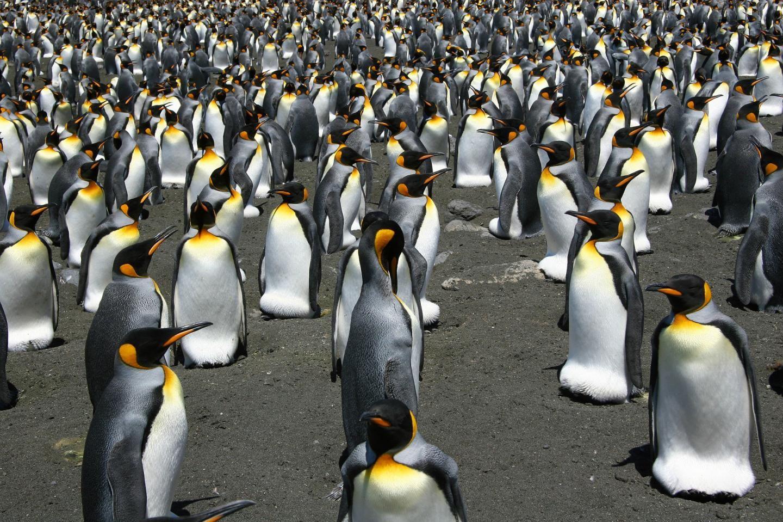 2_27_Penguins
