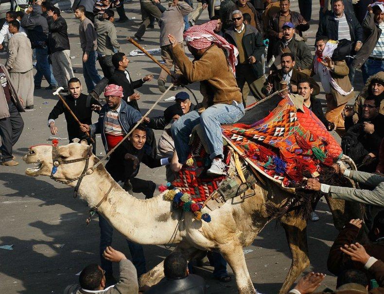 20110202 camel