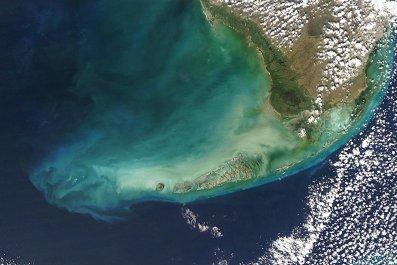 florida keys phytoplankton