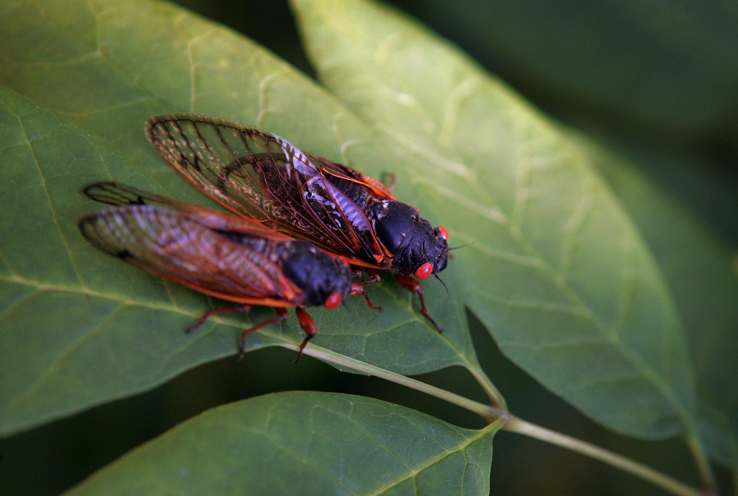 02_27_cicada