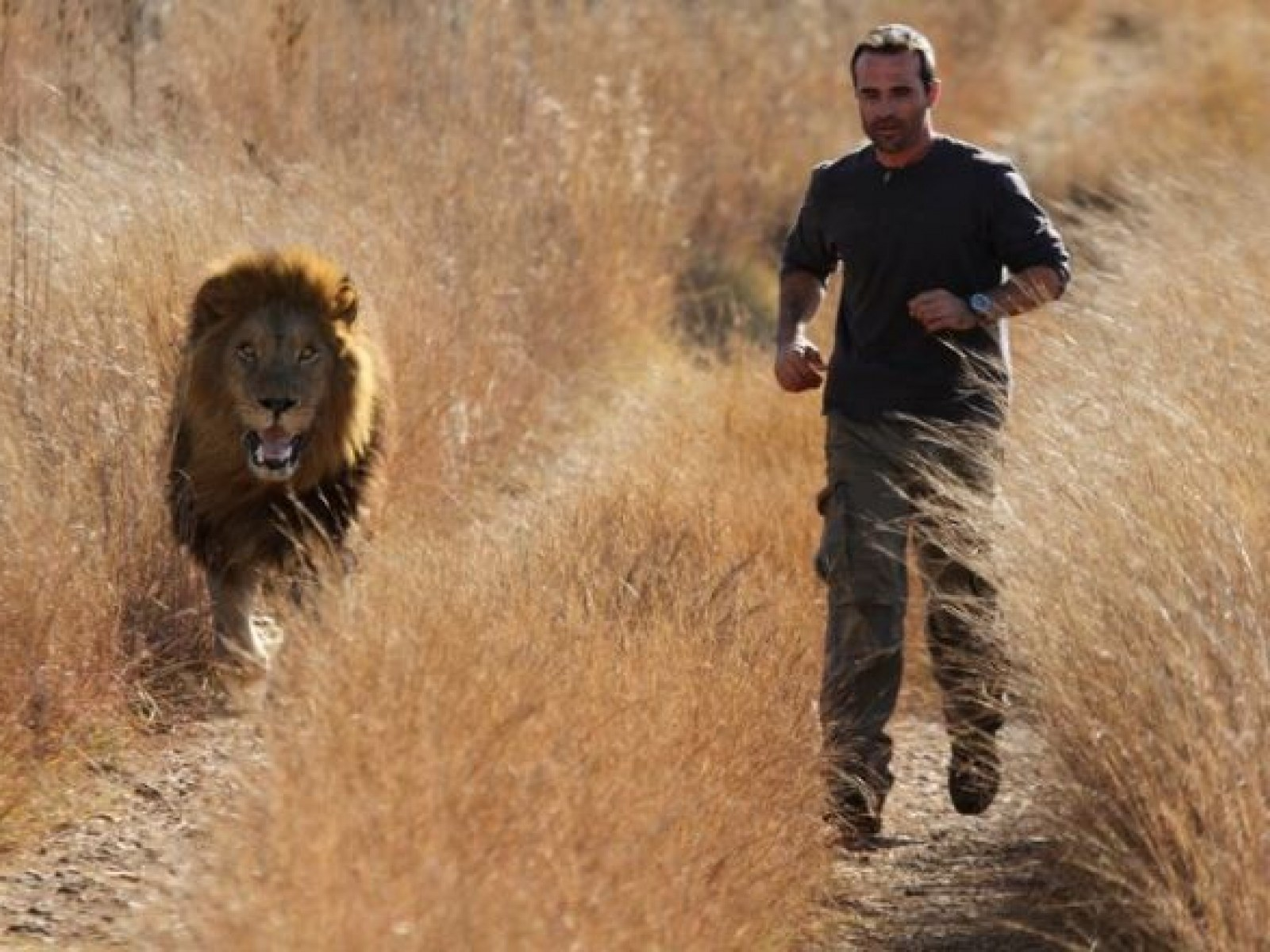 Lion Whisperer' Breaks Silence After Lioness in His Care