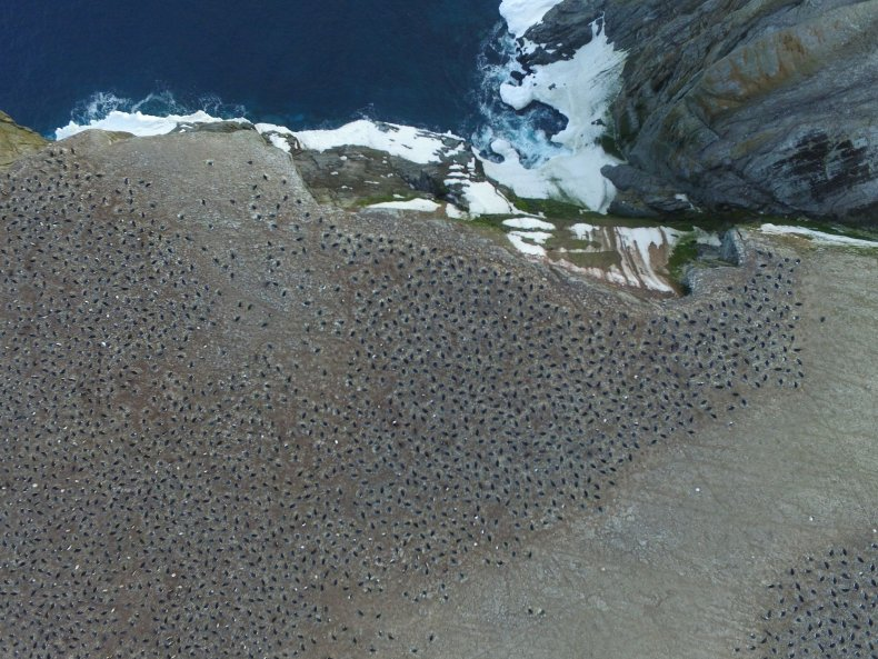 Penguins_From_Above