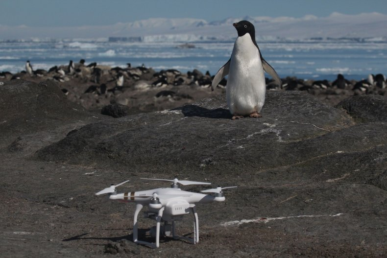 Pengui_and_Drone