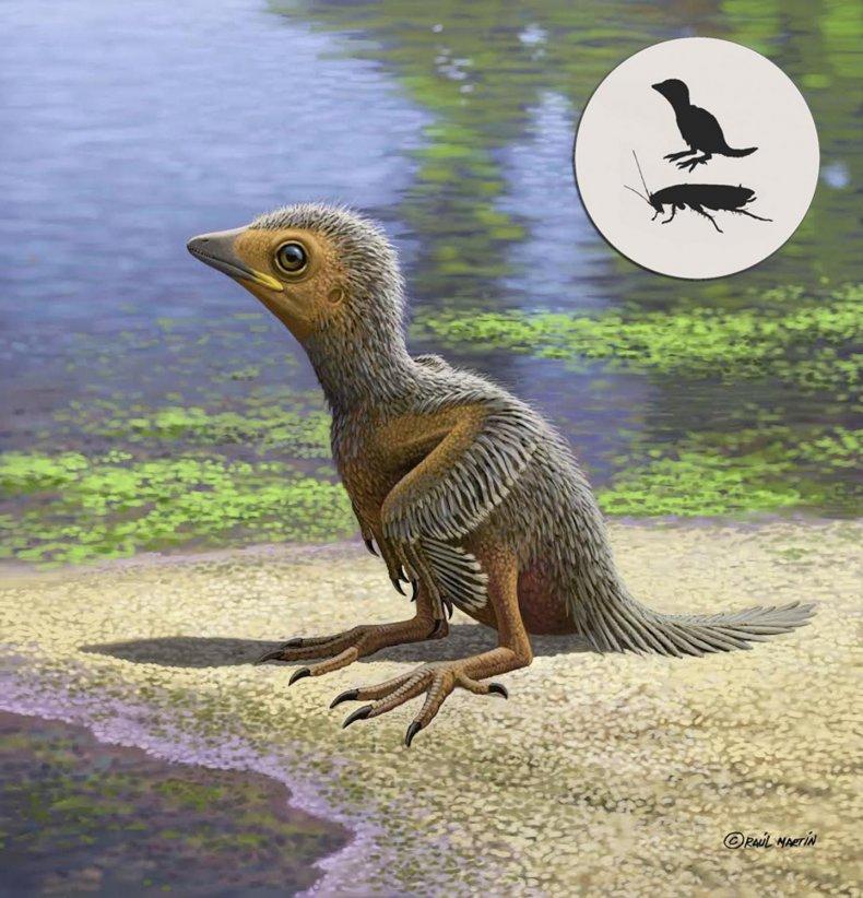 3_2_Fossil baby bird