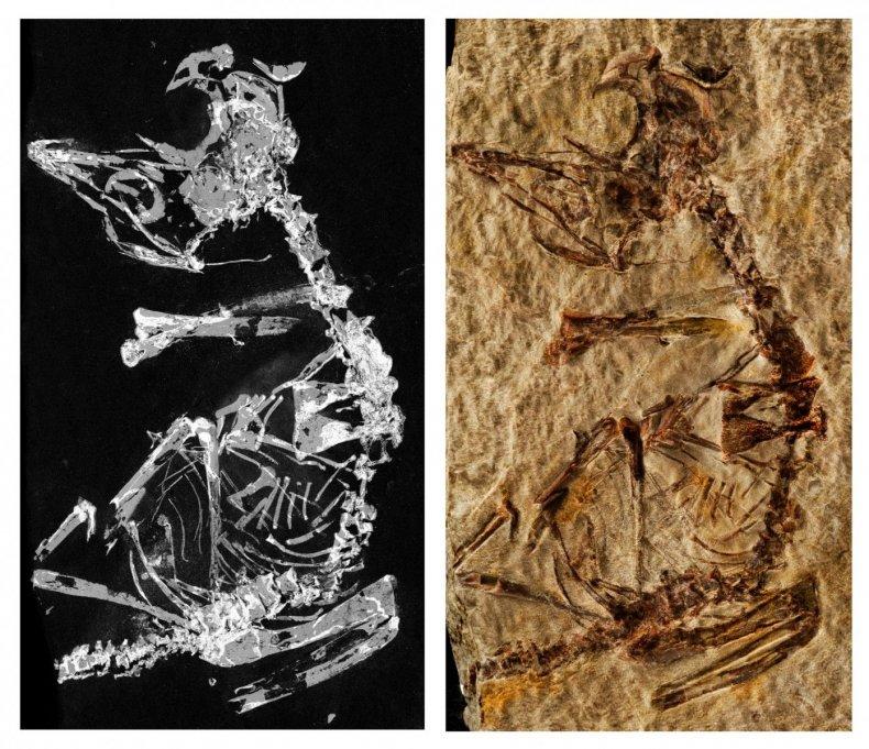 3_5_Fossil bird