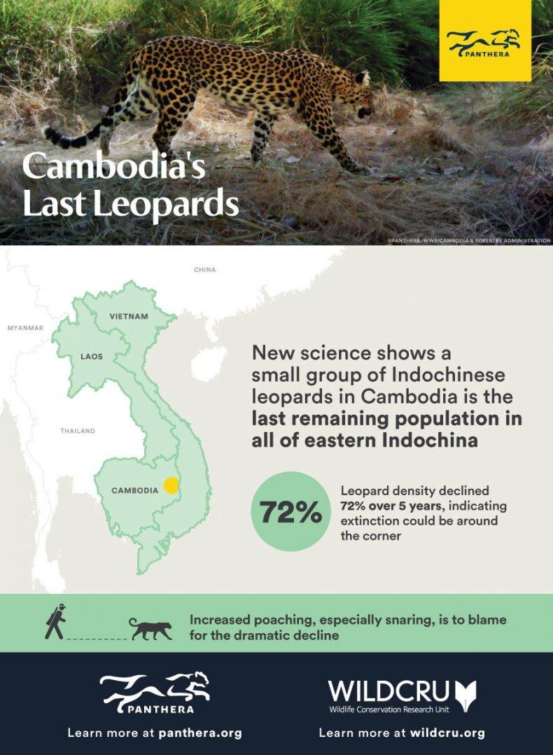 CambodianLeopardPaper_Infographic