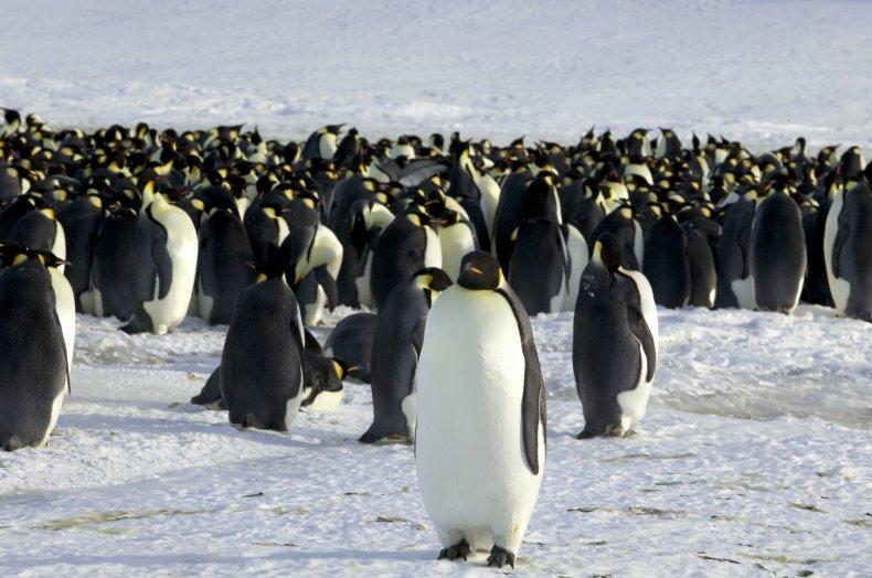 03_09_Penguins