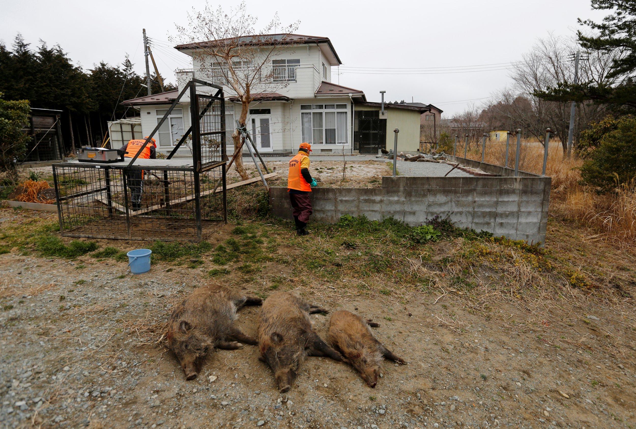 wild-boar-japan