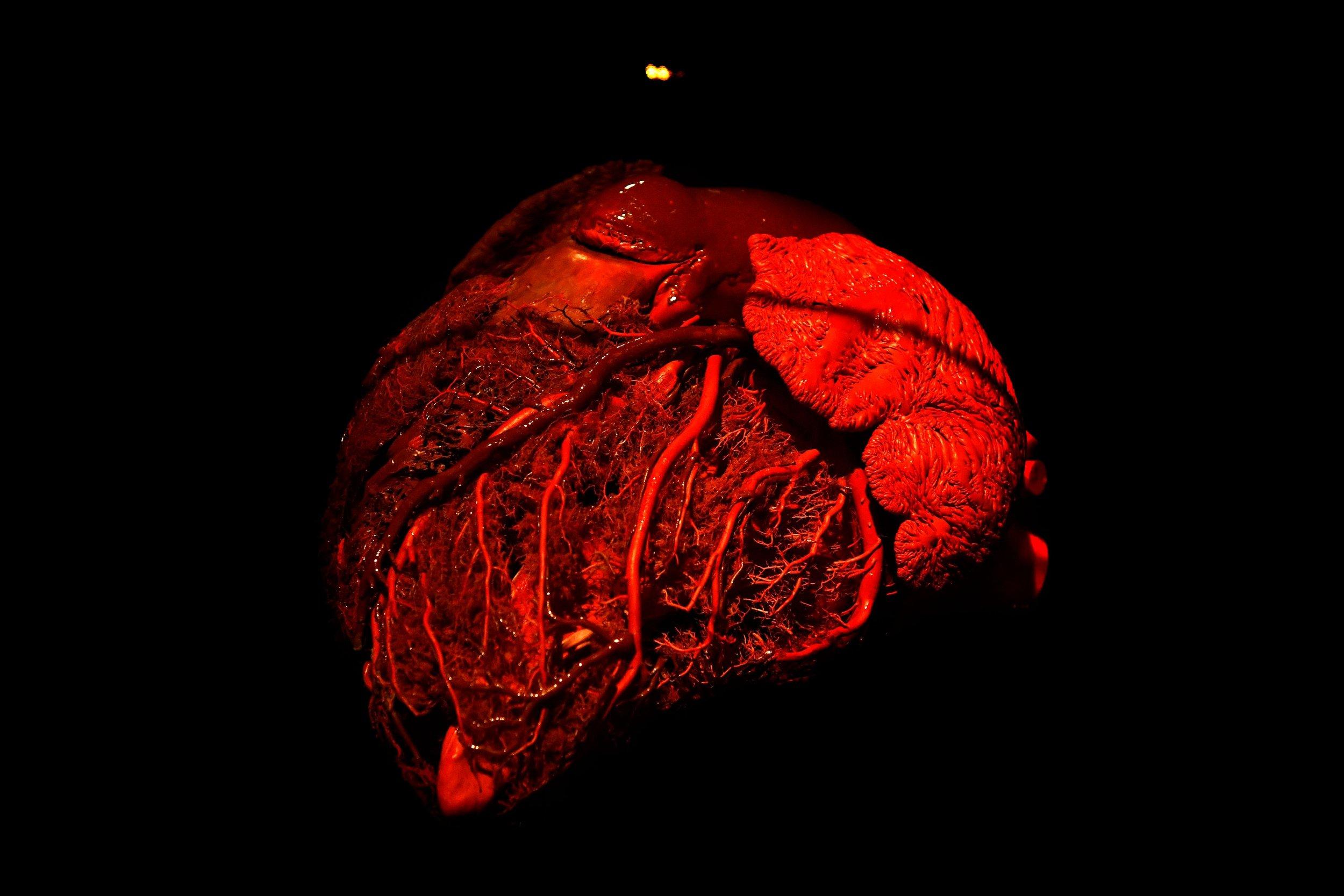 3_9_Heart