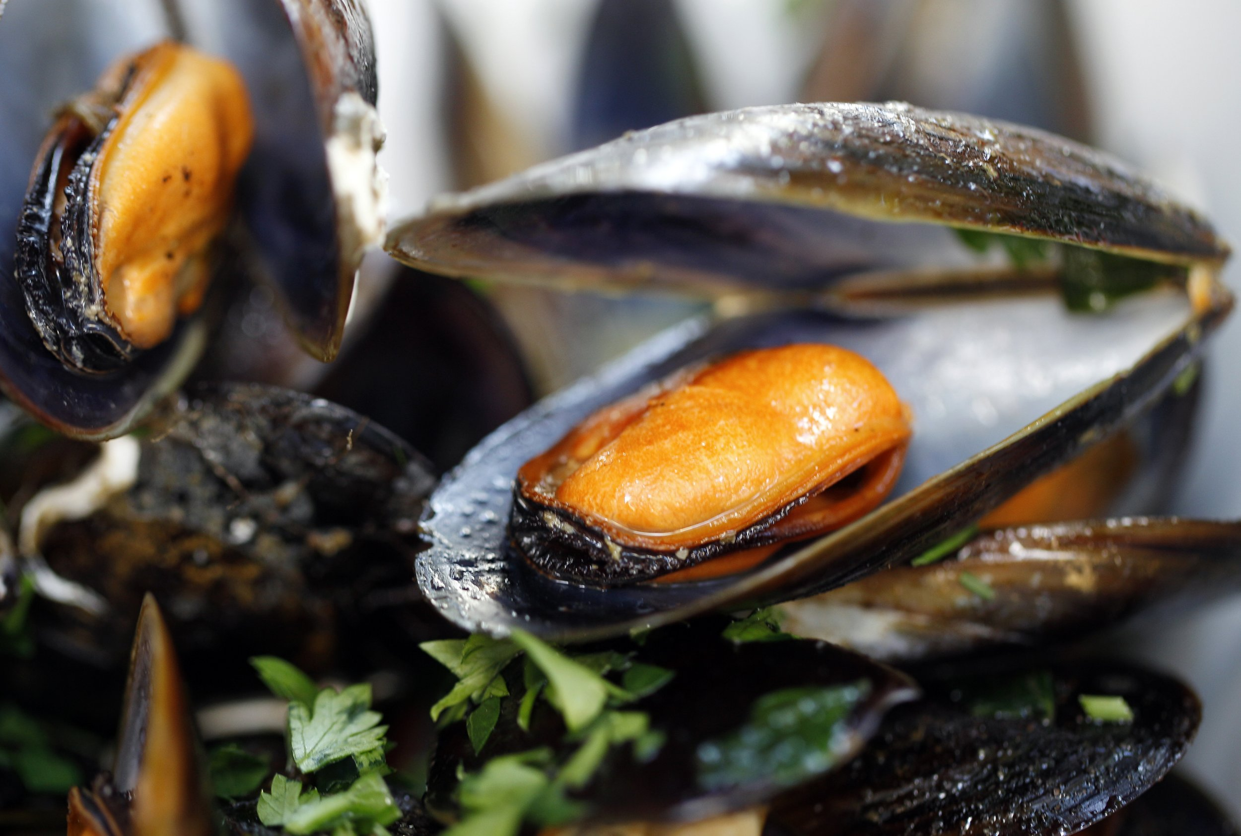 pictures Shellfish Toxin Spreading to Eastern U.S., Report Says