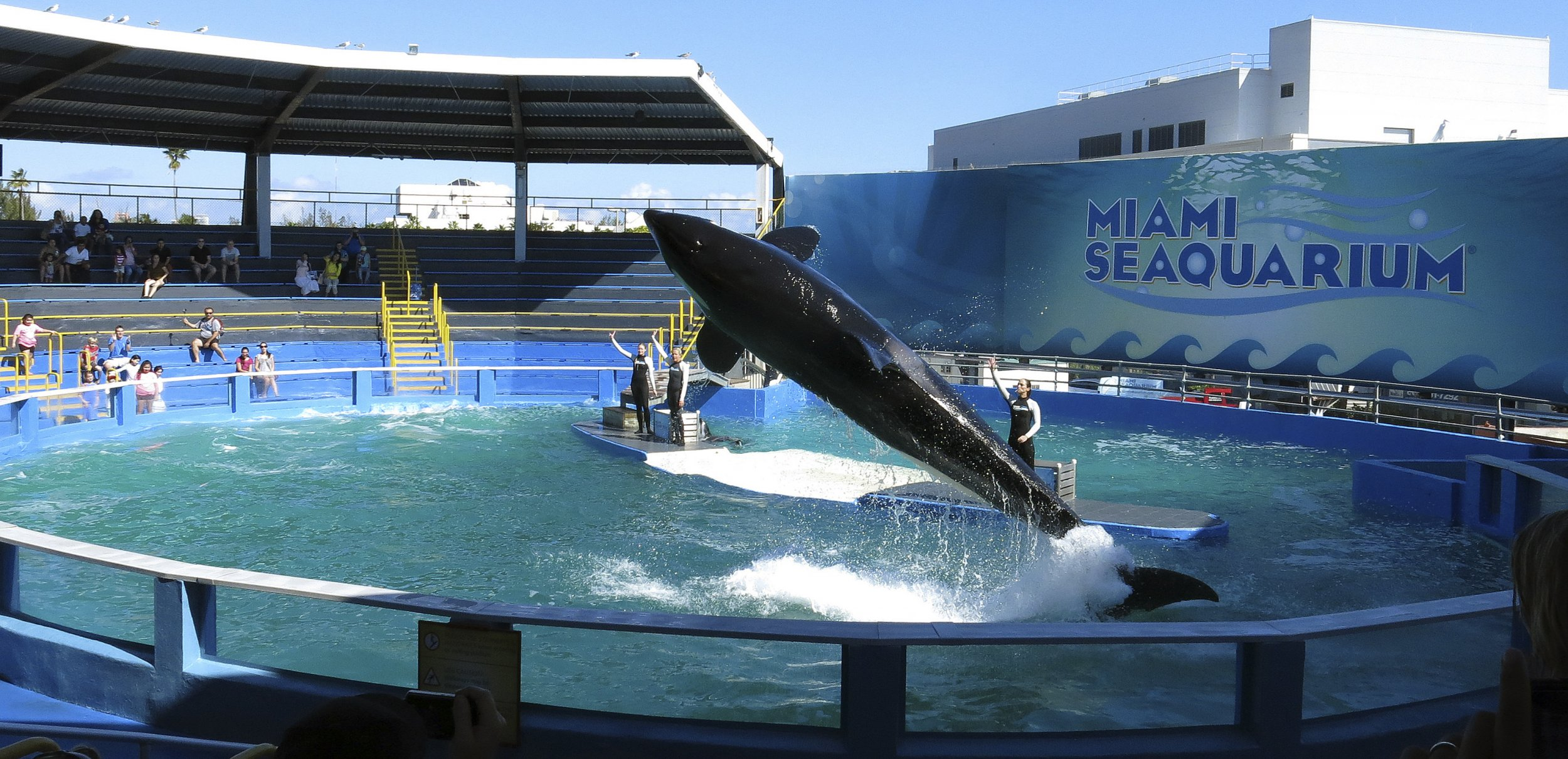 A 52-year-old whale could be about to return home after being kept in captivity for most of her life