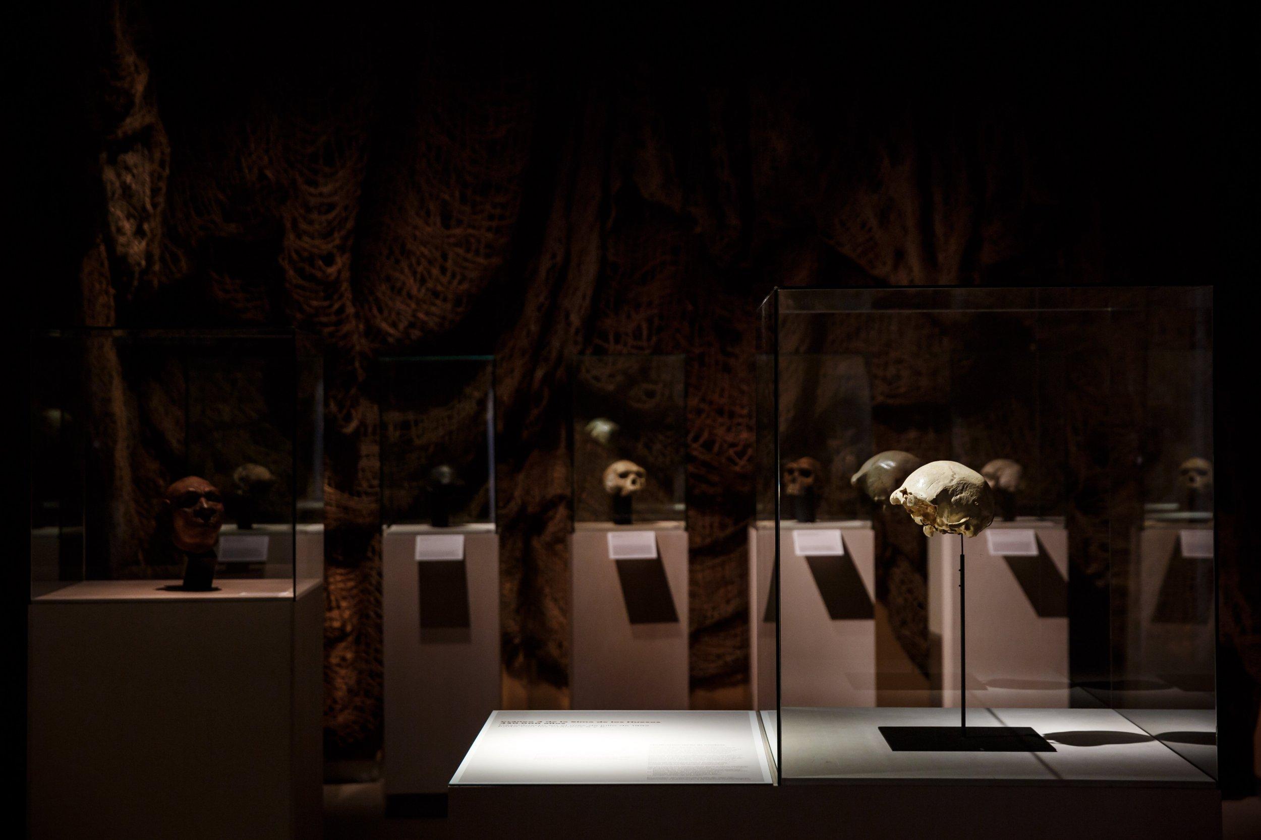 homo heidelbergensis skull burgos
