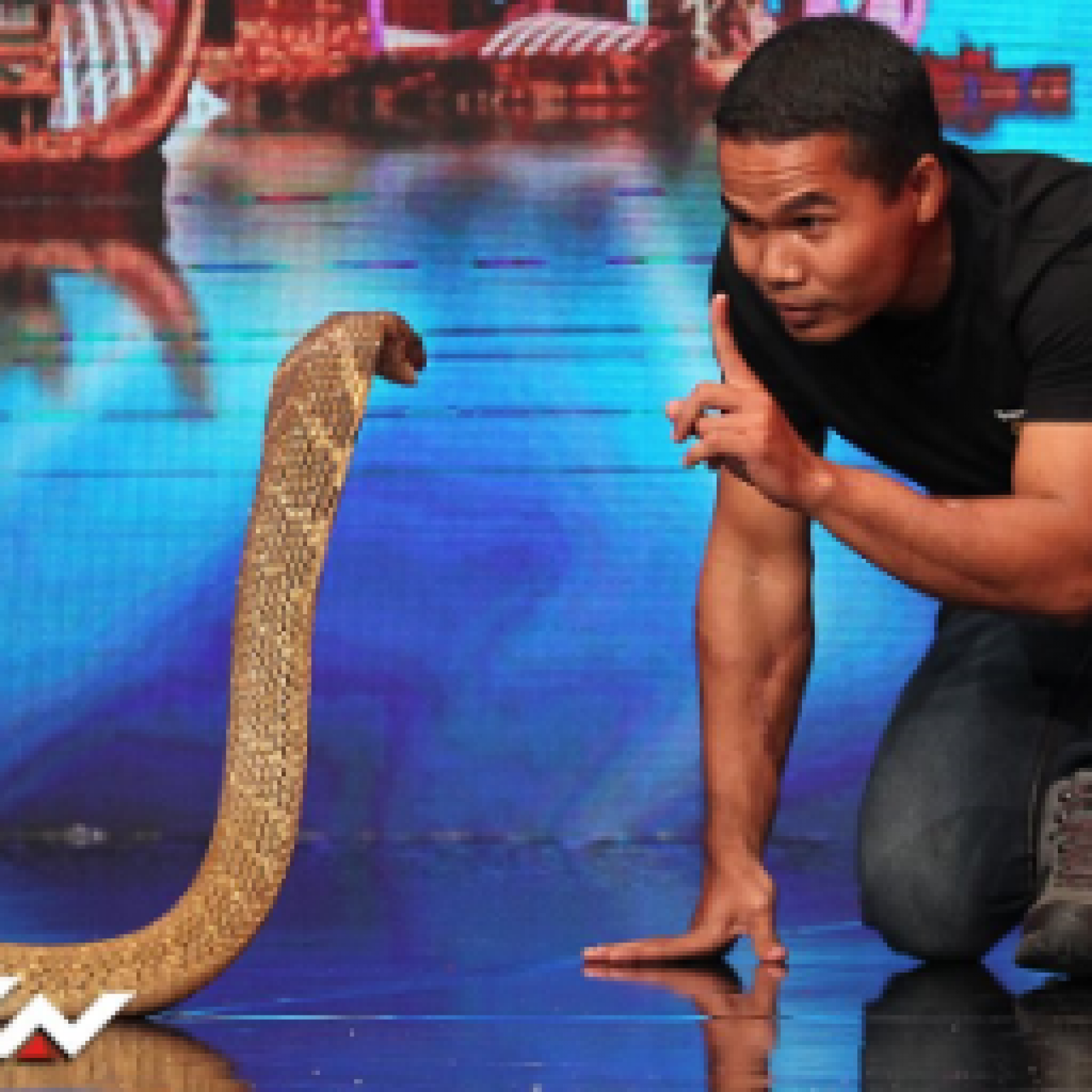 Expert Snake Handler Dies After Cobra Bite