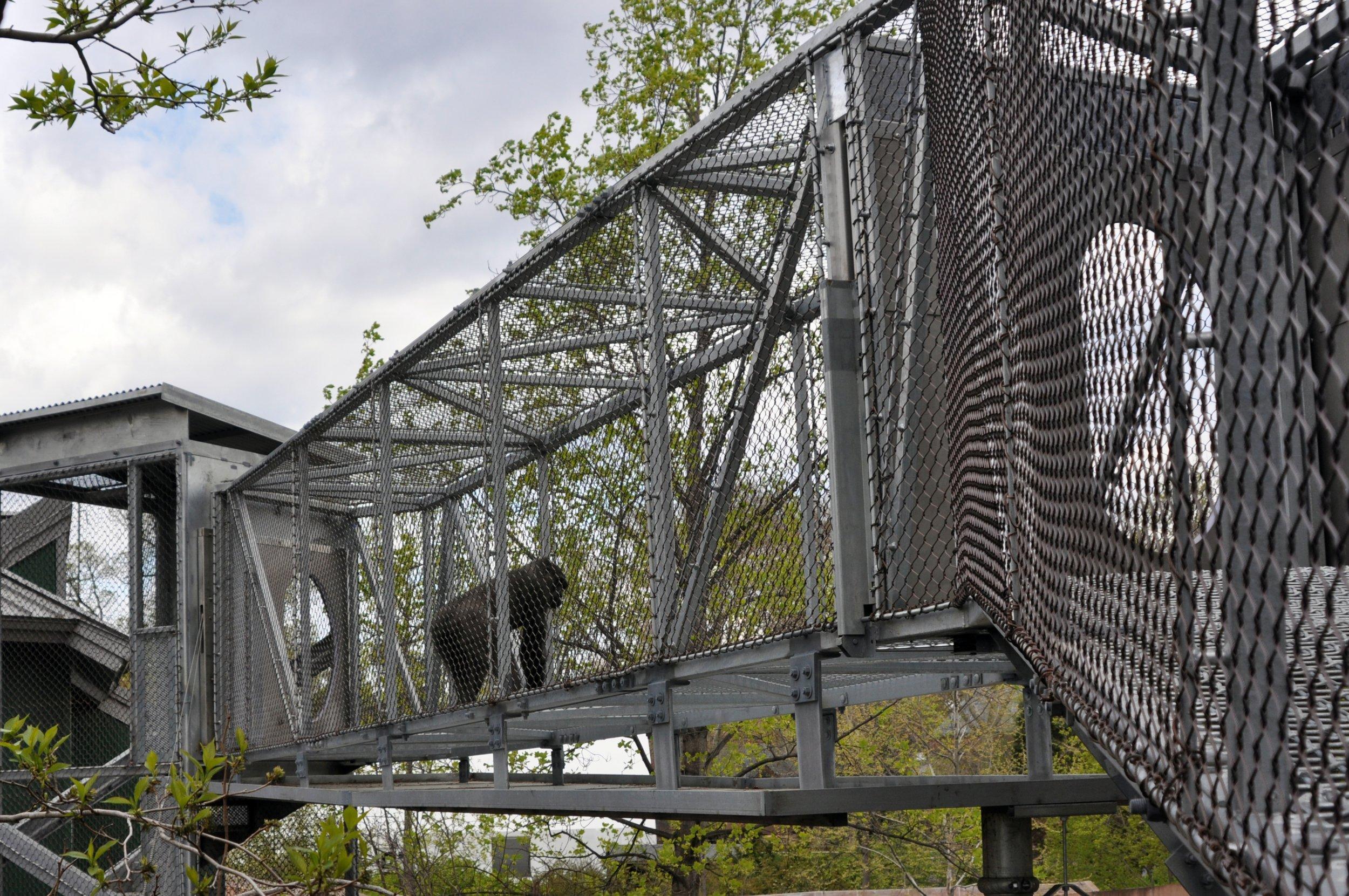 philadelphia zoo gorilla