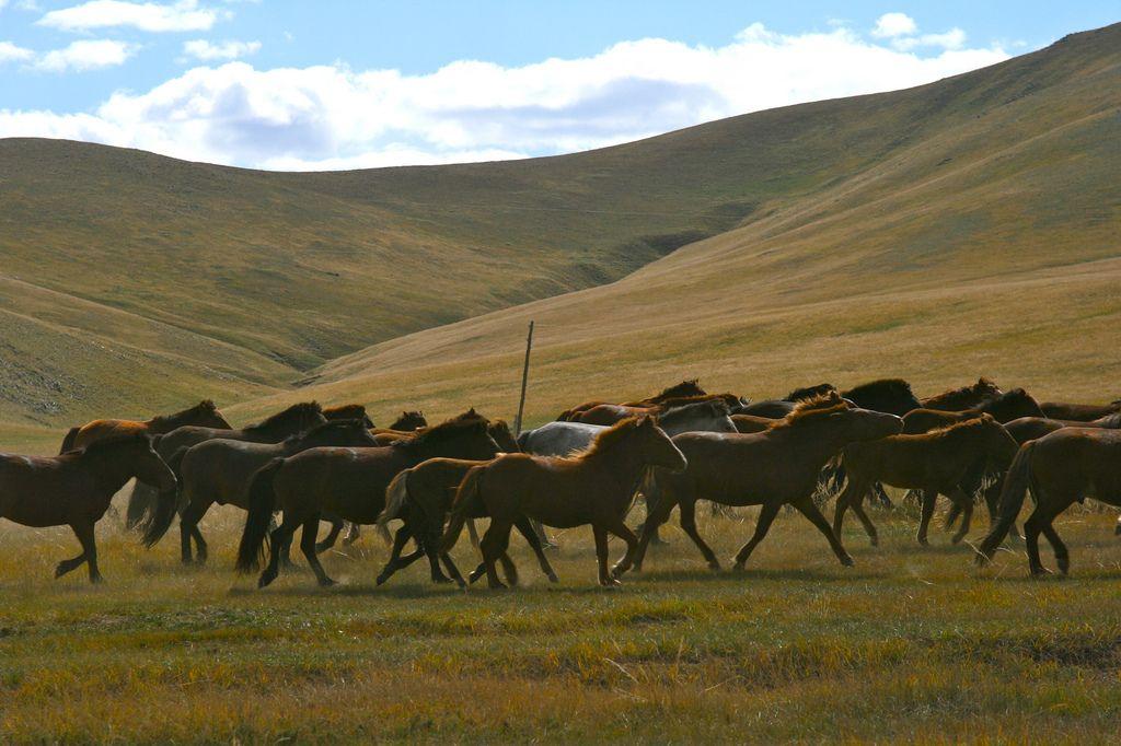 Herd_of_horses