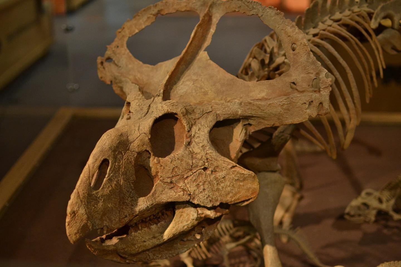 3_21_Protoceratops