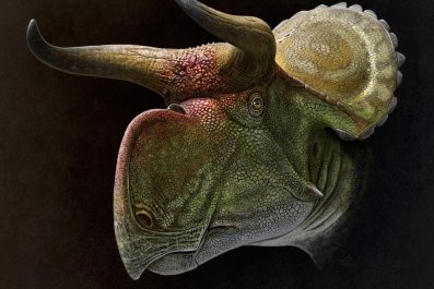 3_21_Nasutoceratops reconstruction