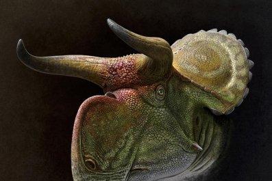 3_21_Nasutoceratops reconstruction