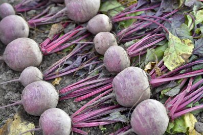 03_21_beets