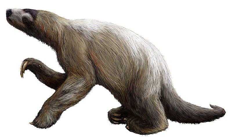 prehistoric sloth