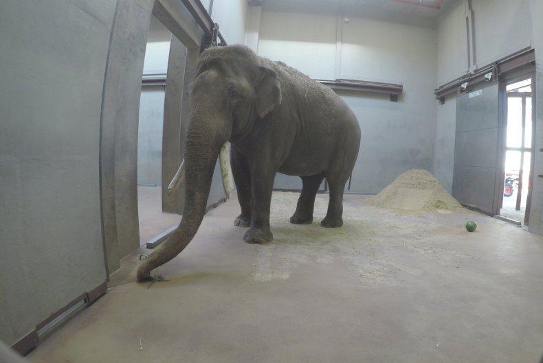 spike the elephant