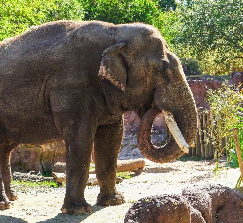 spike the elephant in tampa
