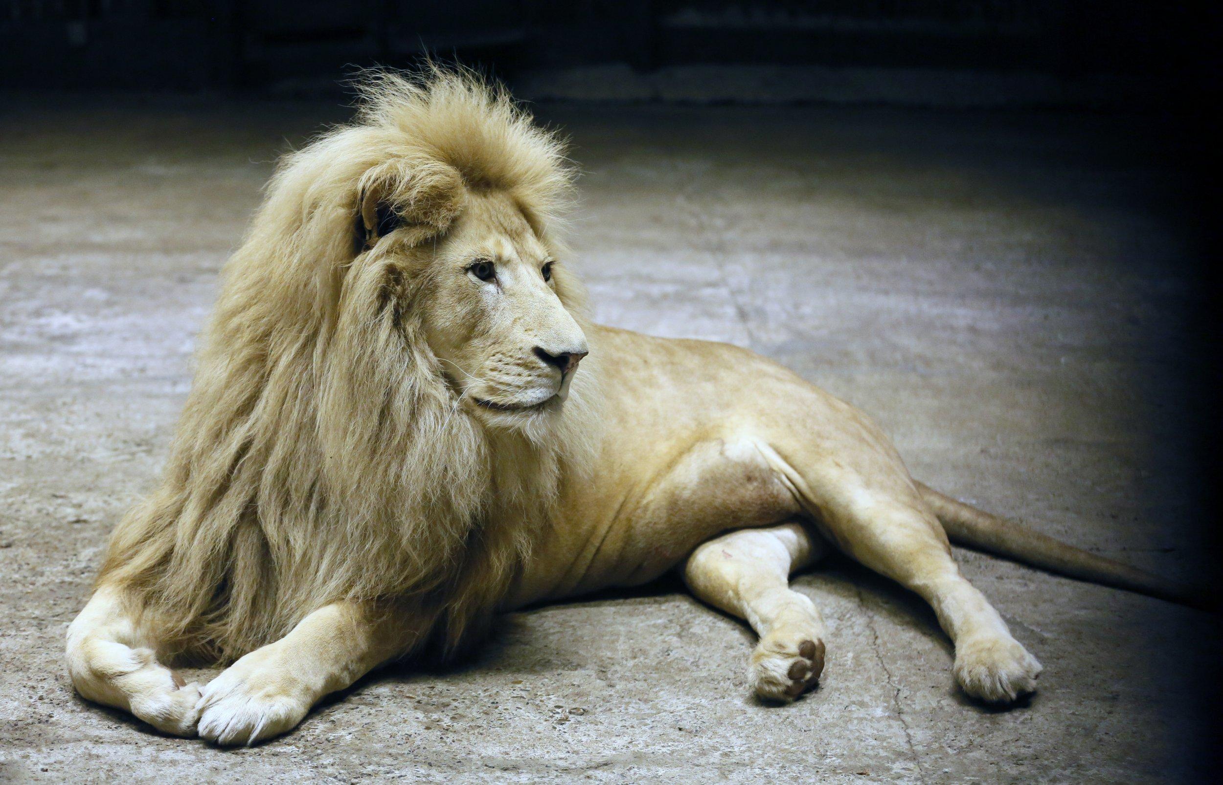 lions - photo #20
